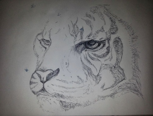 Tiger drawing in progress