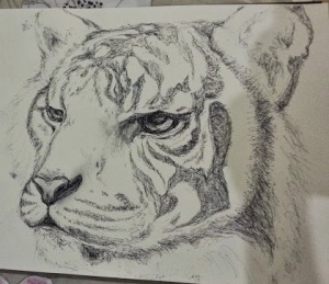 Tiger drawing in progress - A3 Visual Diary Artist: Selina Shapland - 23/10/2013